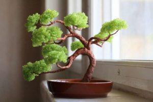 bonsay_iz_bisera22
